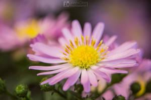 Macro flower 5 by aleexdee