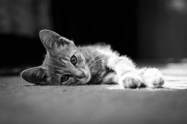 Little kitten lying on floor