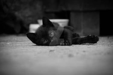 Little black kitten lying on floor