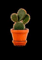 Cactus by Brookerarts