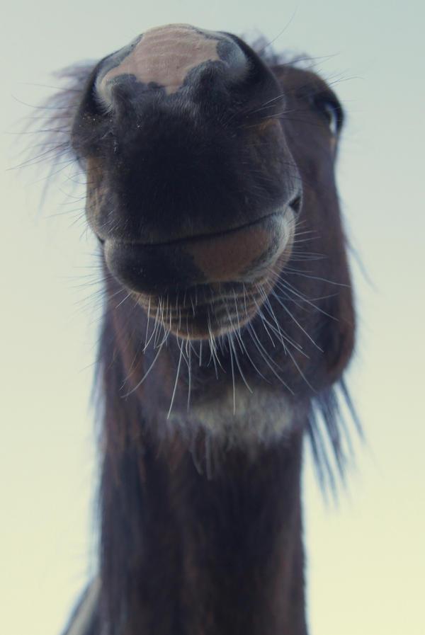 Horse by s3lenka
