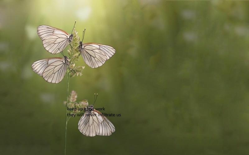 Grass Butterflies by widooolag