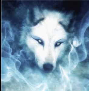Midnite-Wolfe's Profile Picture