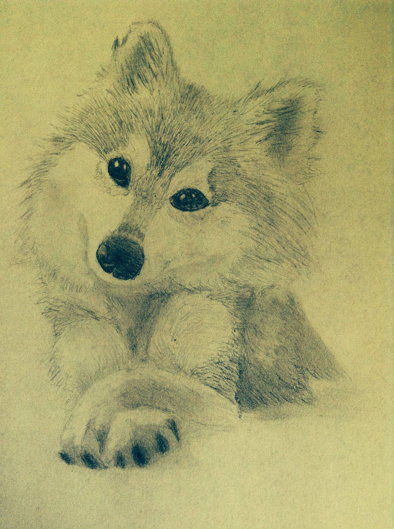 Cute wolf pencil drawing by honeycricket