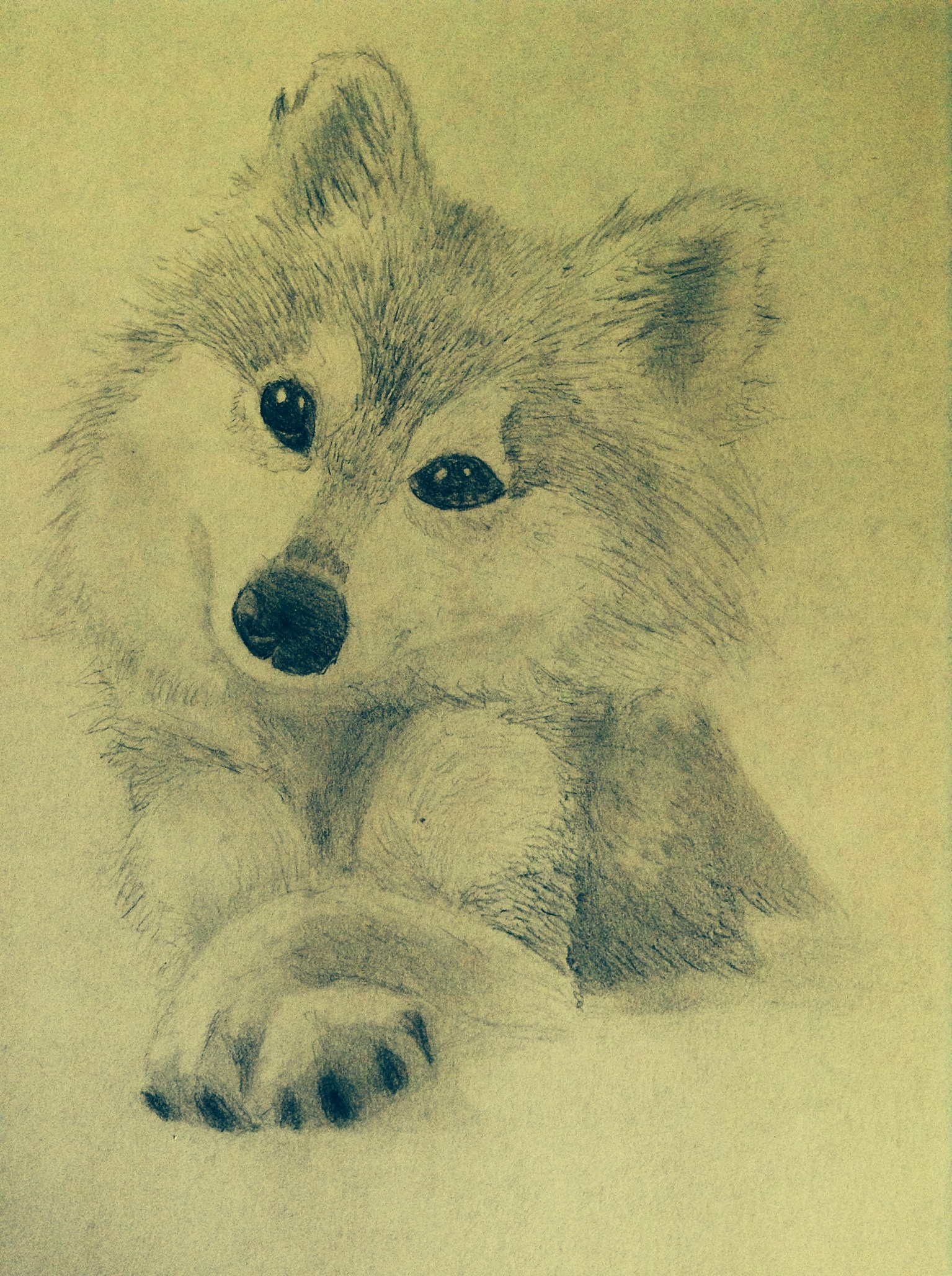 Cute Wolf Pencil Drawing By Honeycricket On Deviantart