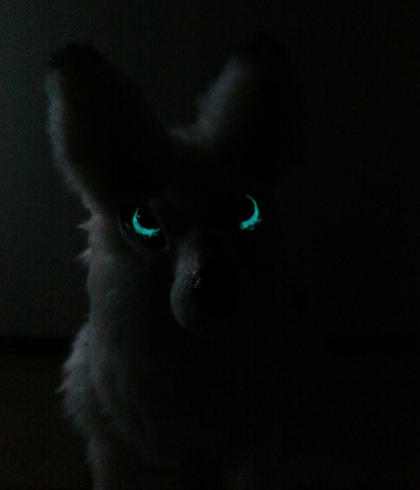 Wolf eyes in dark - photo#9