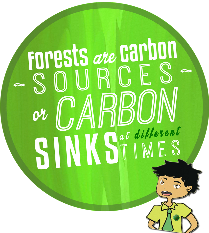 carbon sink and sources