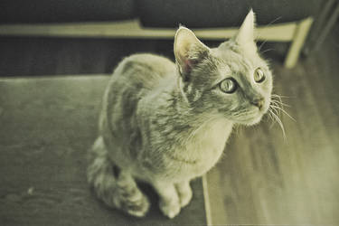luke the cat I by deliberated