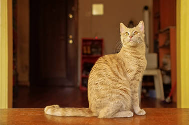 luke the cat IV by deliberated