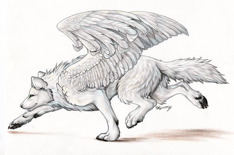 Anime white wolf with wings