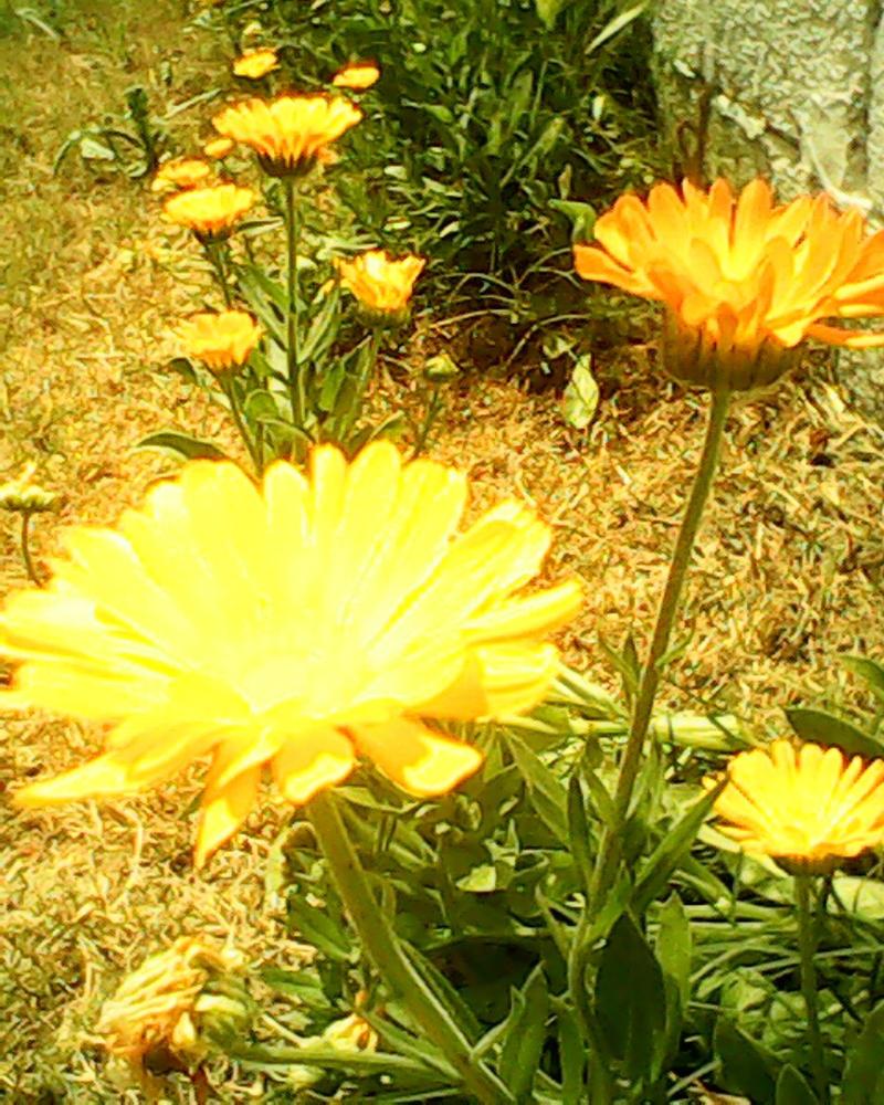 Sunshower by Marquitos1986 on DeviantArt # Sunshower Ogen_002900