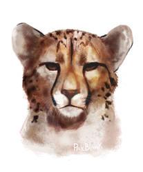 Cheetah by PaleBlank