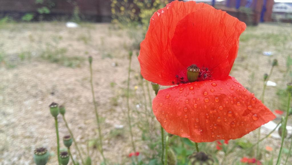 Poppy by PlayTheFox