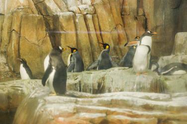 Penguins by manders123