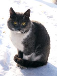 v1mpaler's Profile Picture