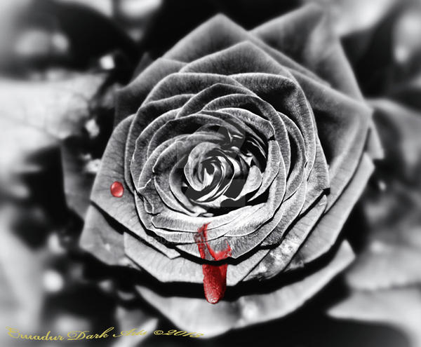 ~Blood Rose~ by Eruadur
