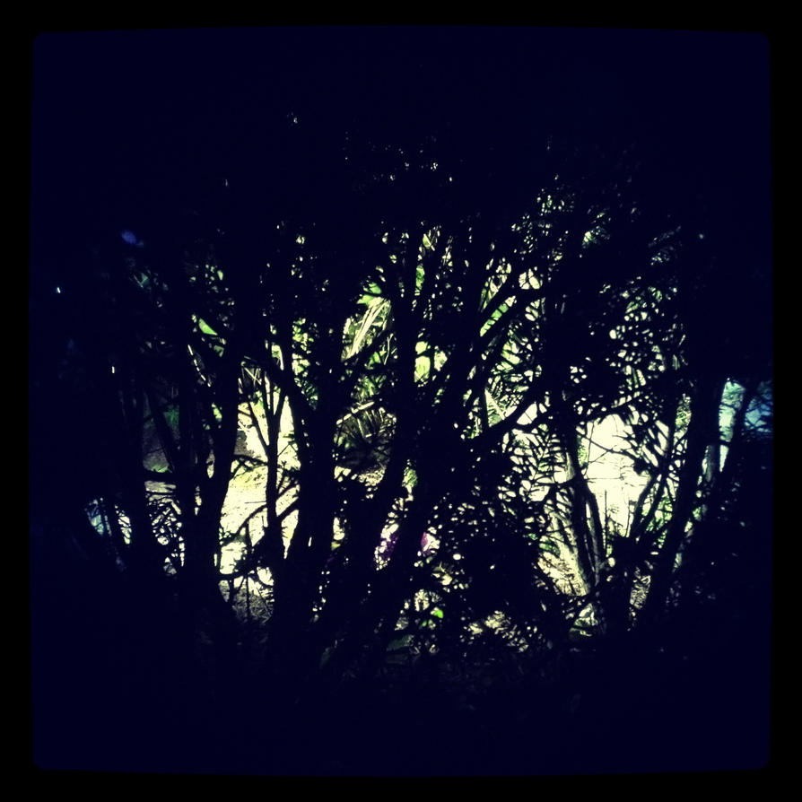 Into The Wild Woods - The Weirding Willows by DeevElliott
