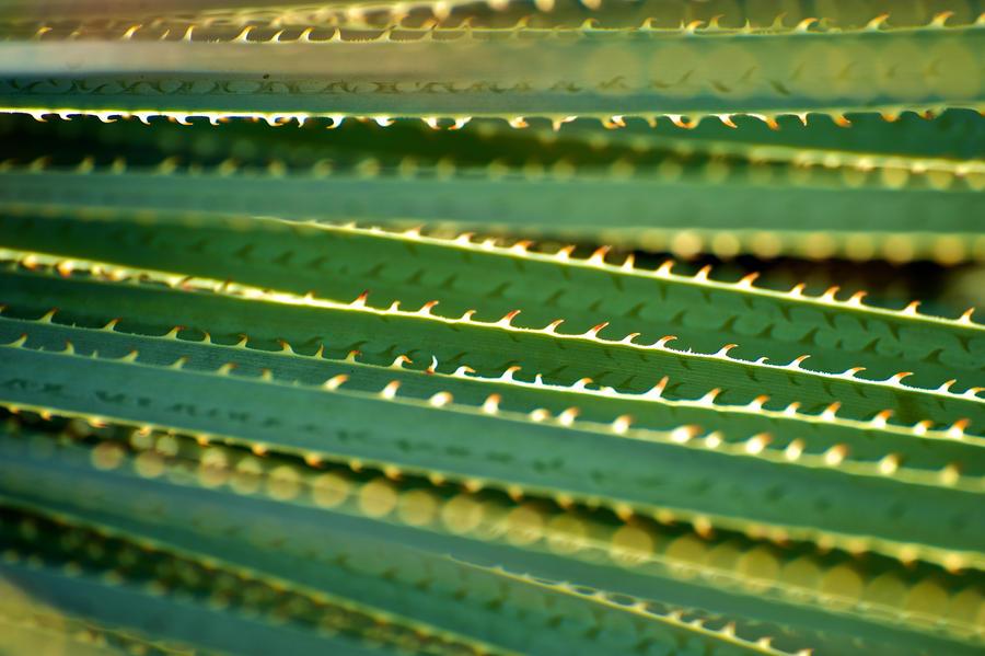 plant texture stock 1