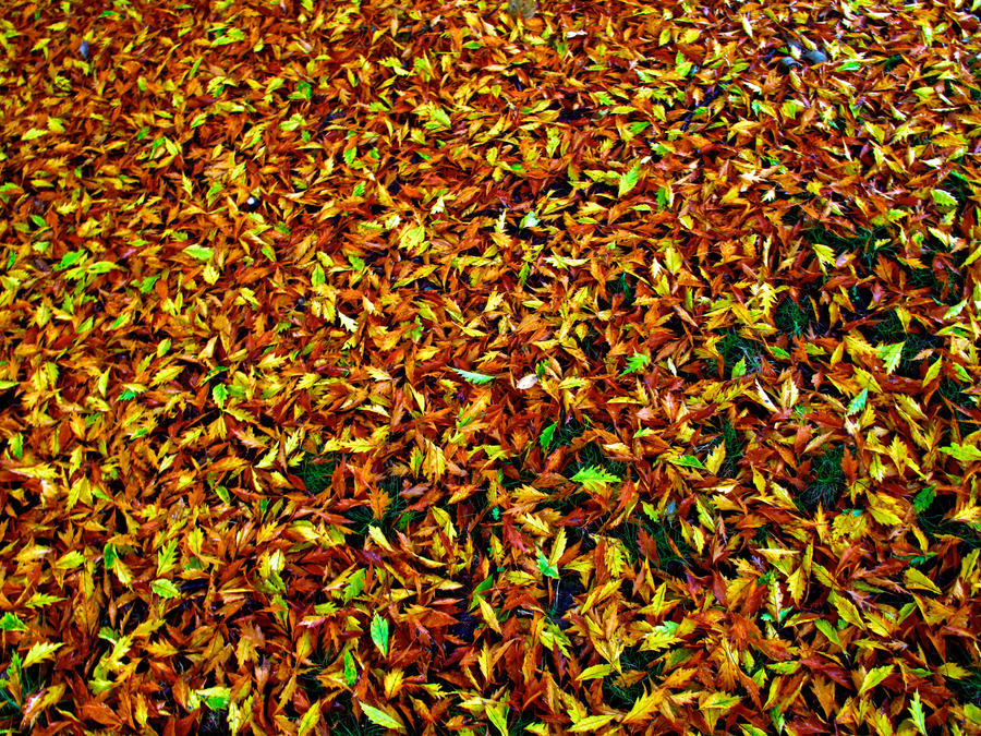 fall leaves stock