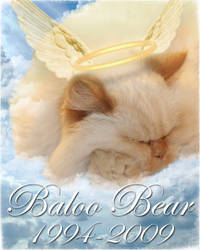 Baloo Bear, my angel kitty by BriteWingz