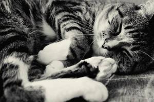 wake up kitty. by kamilla-b