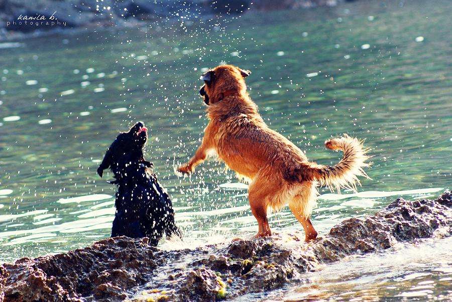 dogs just wanna have fun. by kamilla-b