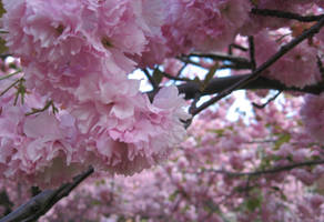Spring Time by Darizard