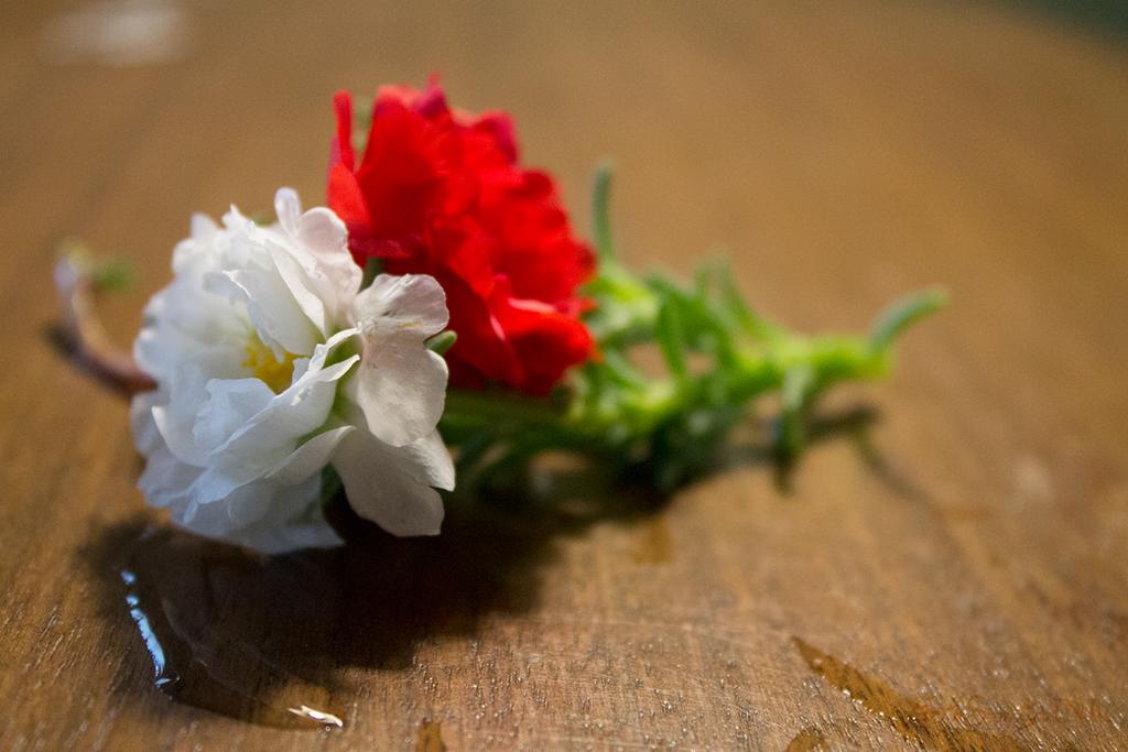 Little Flowers, Big Feelings by ForthSanity