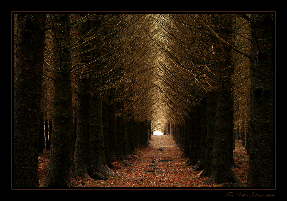 Hallway of the Elves by quanitz