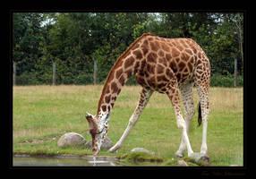 Thirsty Longneck by quanitz