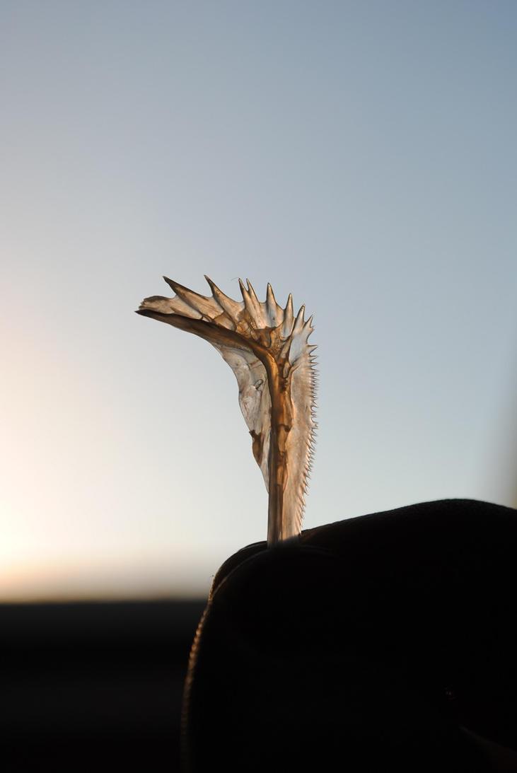Fishbone by DanoGambler