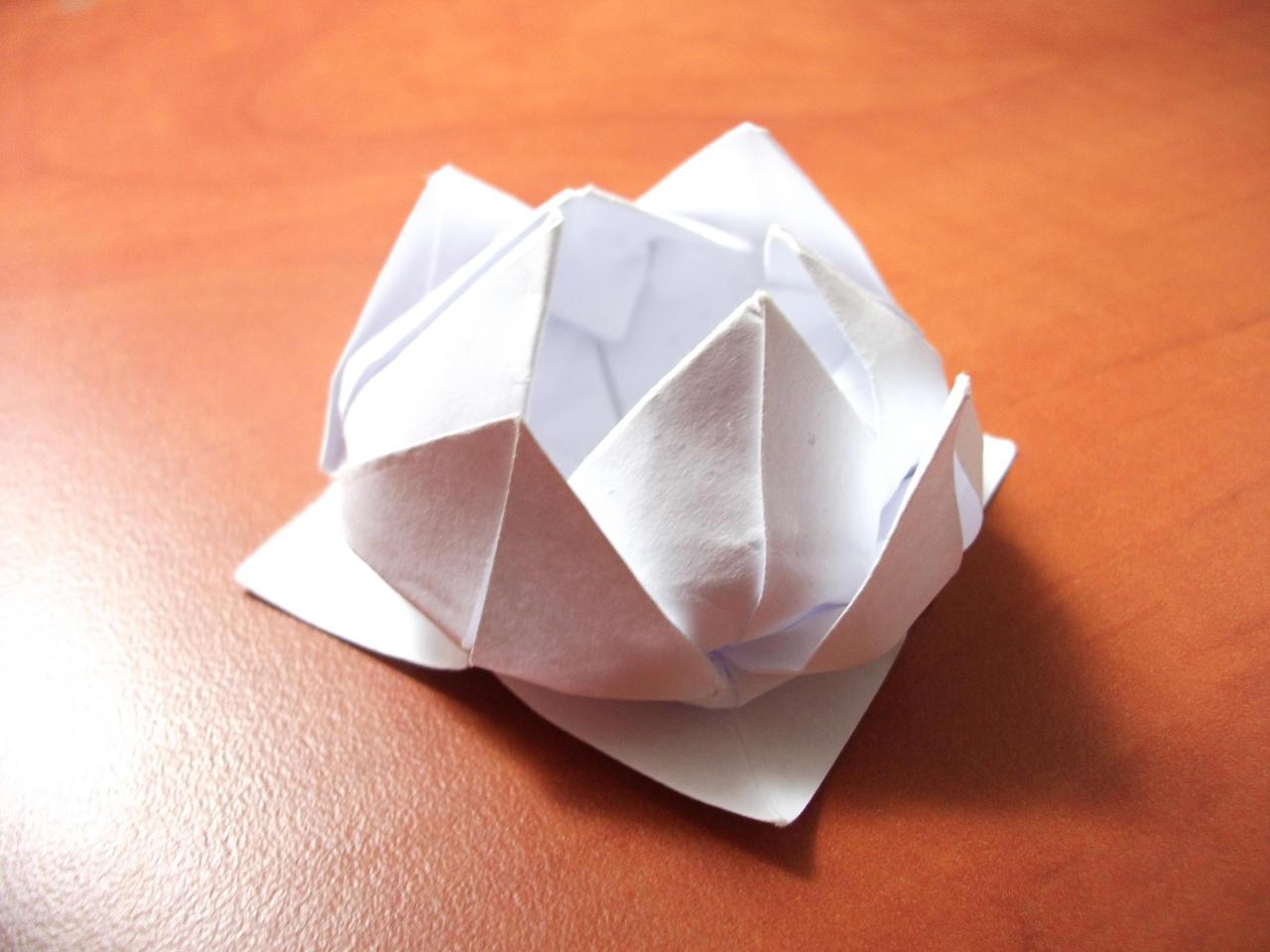 Origami - Water Lily by KomplexGyok on DeviantArt - photo#1