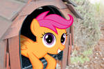 Scootaloo in a Box