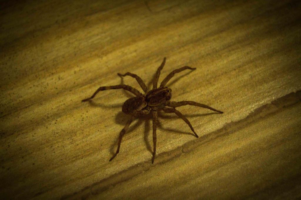 I shot a Spider by SakkeMiine