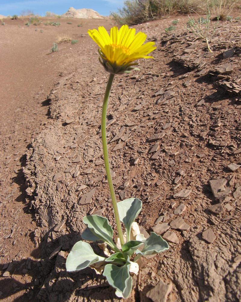 desert flower Tue, 12 jun 2018 23:49:00 gmt desert flower pdf - desert flower directed by: sherry hormann: produced by: peter herrmann, desert flower filmproductions, dor film.