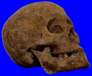 Skull_2 by FiruL33T-Stock