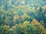 .autumn trees.