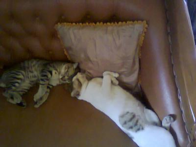 Sleep All Day by lisa-adrina