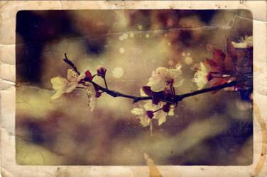 .as spring begins. by LastAutumnShade