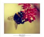 .Bumble Bee. by LastAutumnShade
