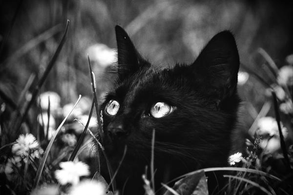 Black Cats are made of God by LastAutumnShade
