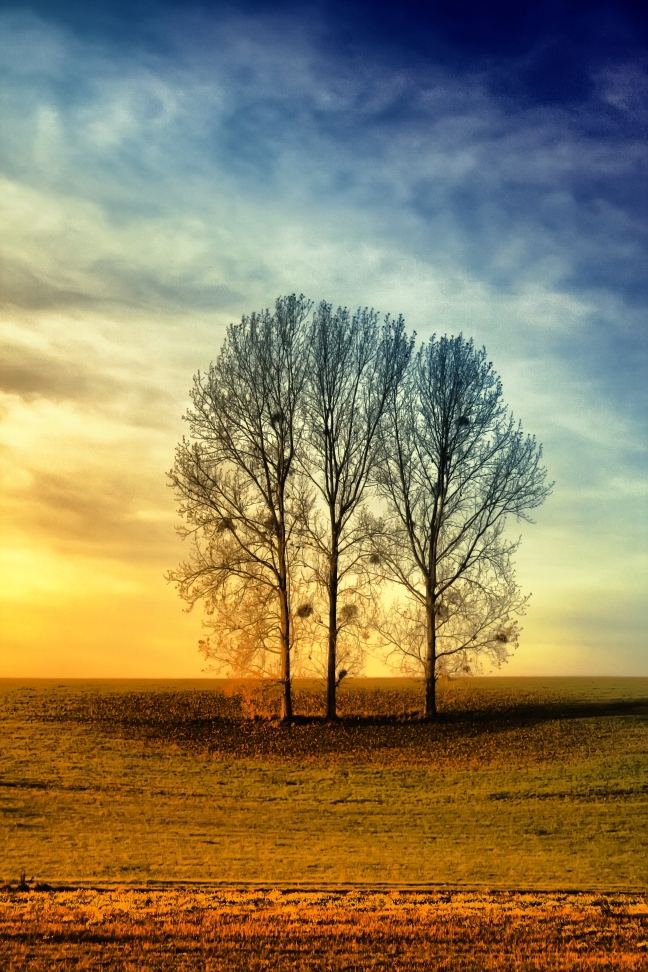 .Trees. by LastAutumnShade