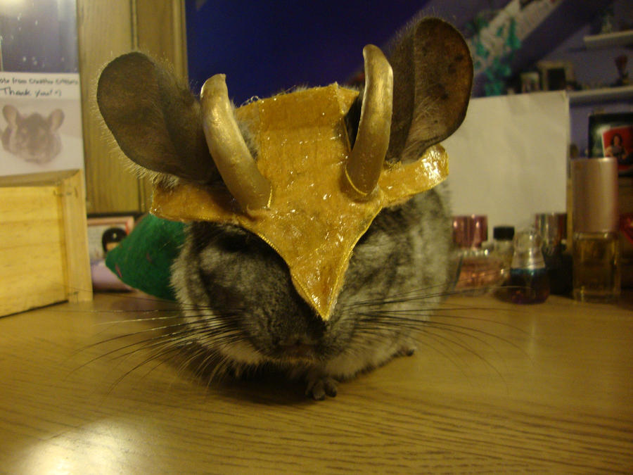 loki chinchilla cosplay front by the-muffin-lord