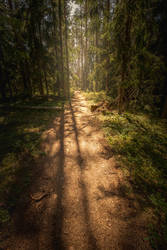 Forest path VIII