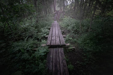 Forest path XI