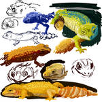 Peche Study (leopard gecko)