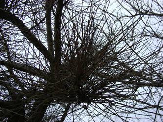 Hedgehog Tree by Imane-ELK