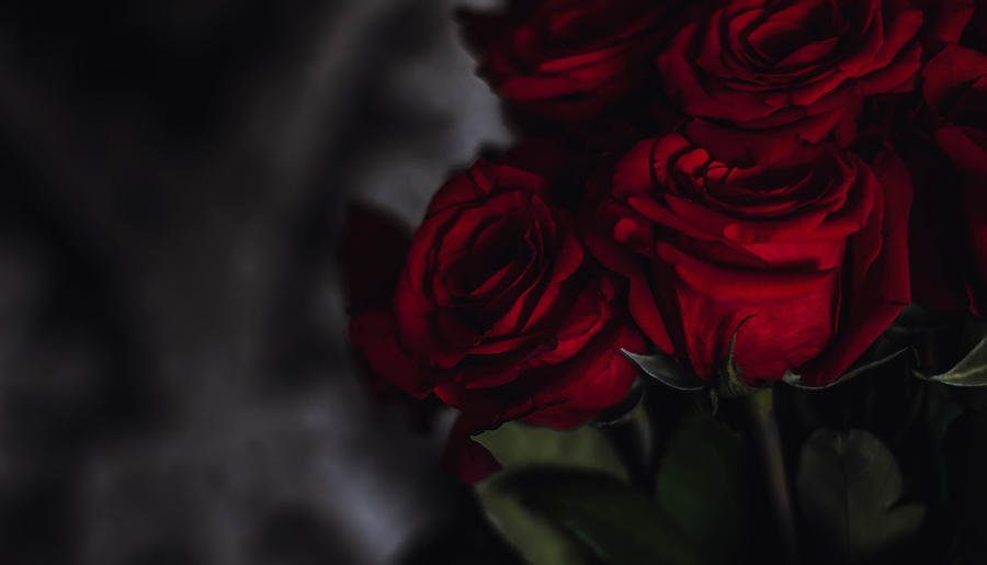 Red velvet by ScarletCardinal
