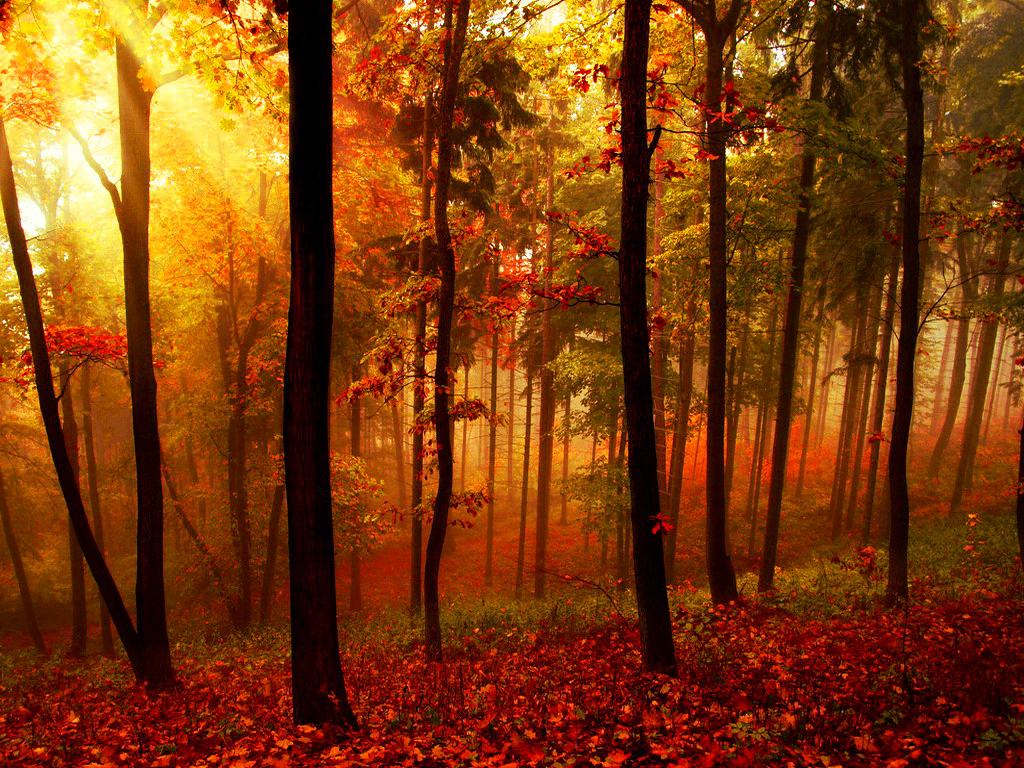 Sun Lights Forest by SottoPK