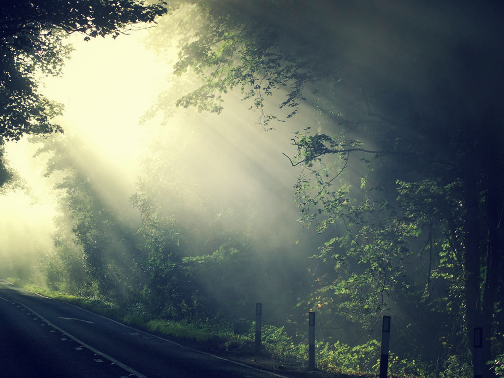 Road Trees Ligh Nature Wallpaper By SottoPK